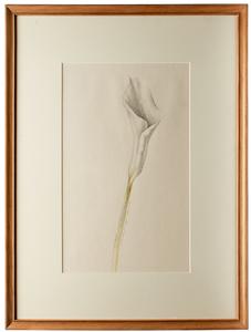 Donald Roller Wilson (American, b. 1938) drawing