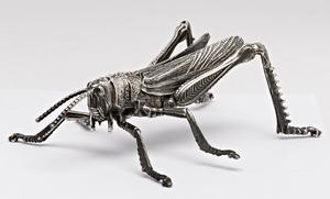 Mazzucato grasshopper