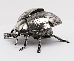 Mazzucato bug